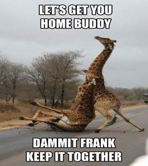 Another drunk… giraffe
