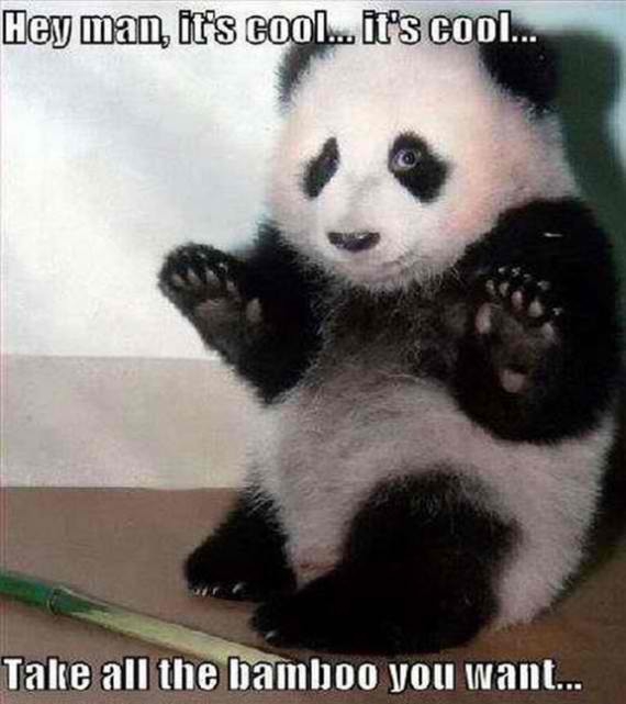 Apologetic panda