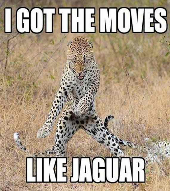 Moves like jaguar