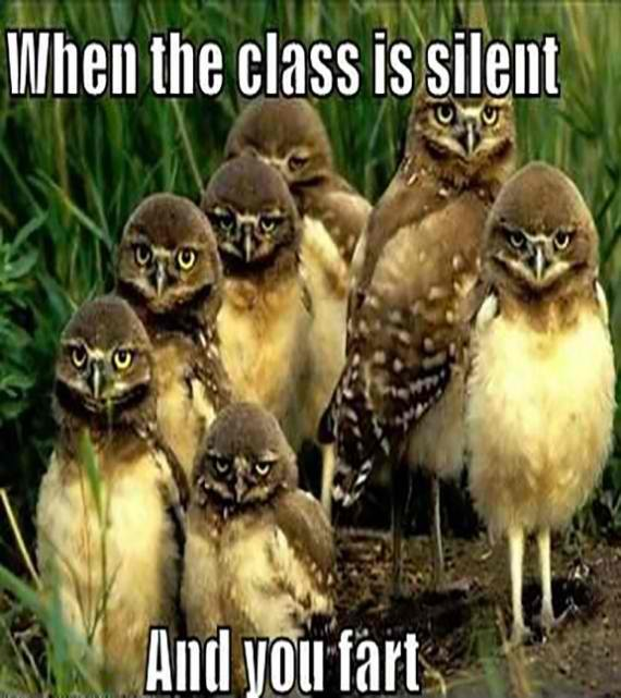 Shhh… These owls are having a class