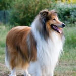 Enjoying the Quiet Life: Take a Brief Look on the Top 10 Most Delightfully Distinct Pet Dogs that Bark Less